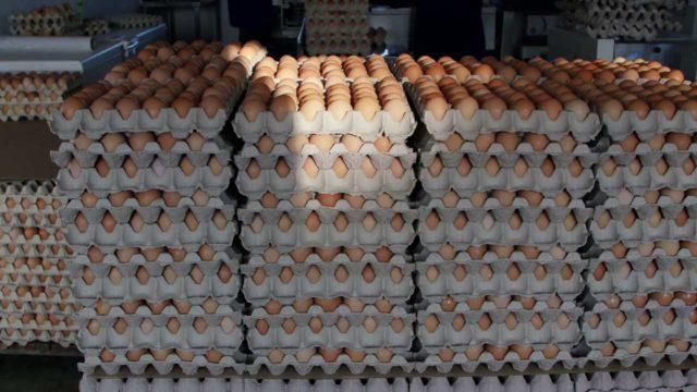 Several crates of eggs. Jalang