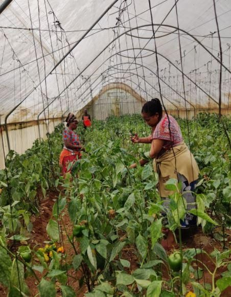 Workers at Kithekani Farms in Machakos county