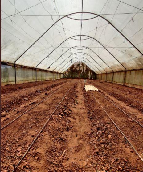 The greenhouse in Kithekani farms in Machakos County.