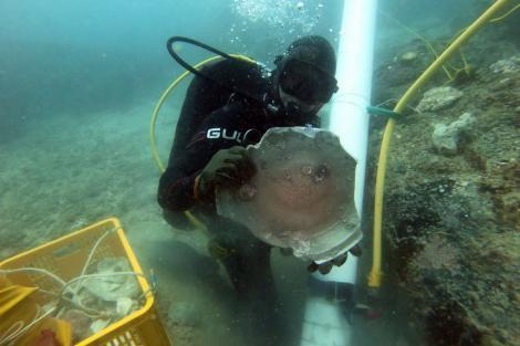 Undated Photo of Underwater Museum
