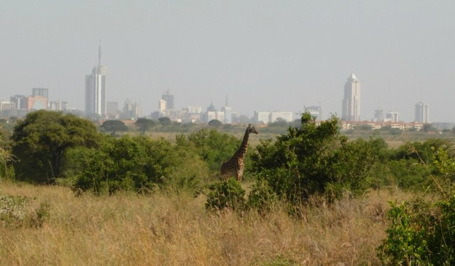 Nairobi Outskirts Day Tour - Giraffe at Nairobi National park