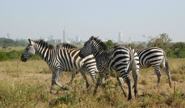 List of Things to do and places to visit in Nairobi, Kenya on a budget