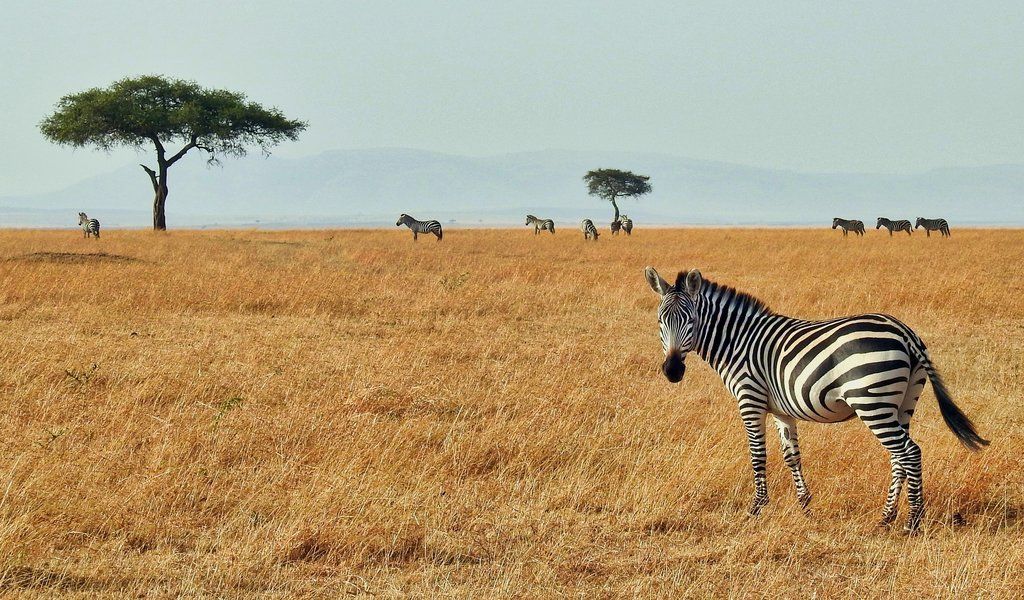 3 Places to travel to for a budget safari