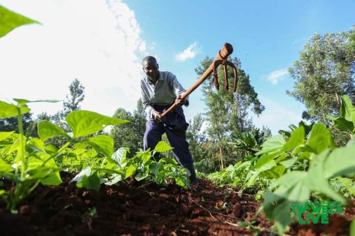 Kenyan-Collective-Connecting-Farmers-Opportunities-Digifarm-Meru-Twaweza-Live