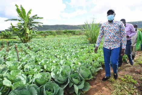 Deputy President William Ruto inspecting a farm in Kikuyu constituency. May 20, 2020.