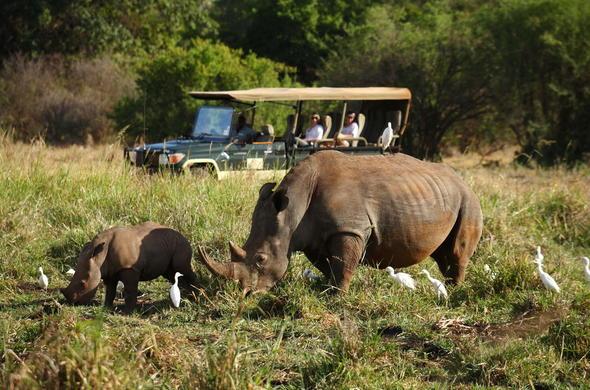 See Elephants on  game drive in Meru National Park.