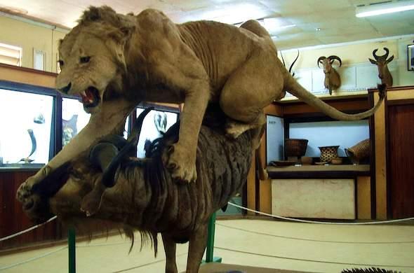 Display at Kisimu Museum in Kenya.