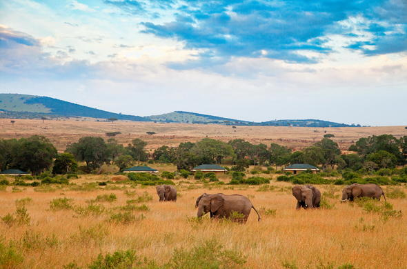 Masai Mara elephants close to camp.