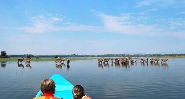 Boat ride Kenya safari in Lake Nakuru waterbucks