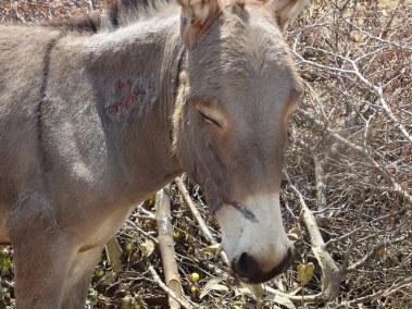 Negative attitude from donkeys