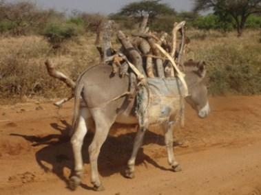 Donkey project (2)