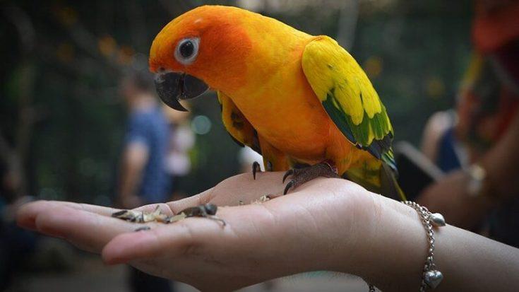 Macam Macam Burung Peliharaan - Burung Makan dari Telapak Tangan