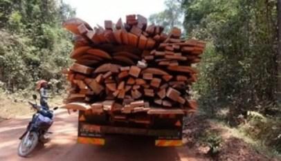 le bois en afrique