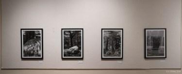 Mt. Ida Pine Trees on Wall #3