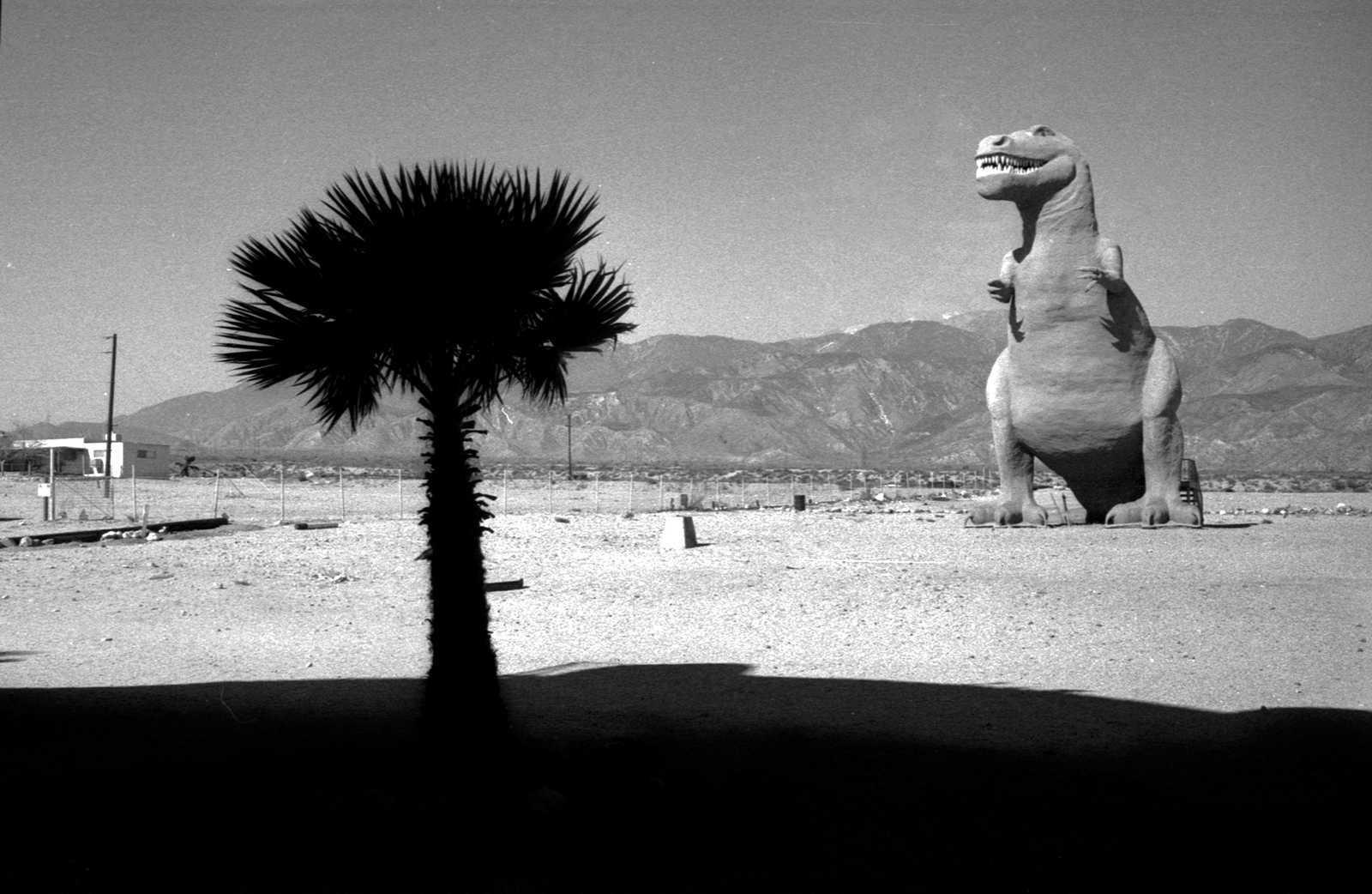 New Desert
