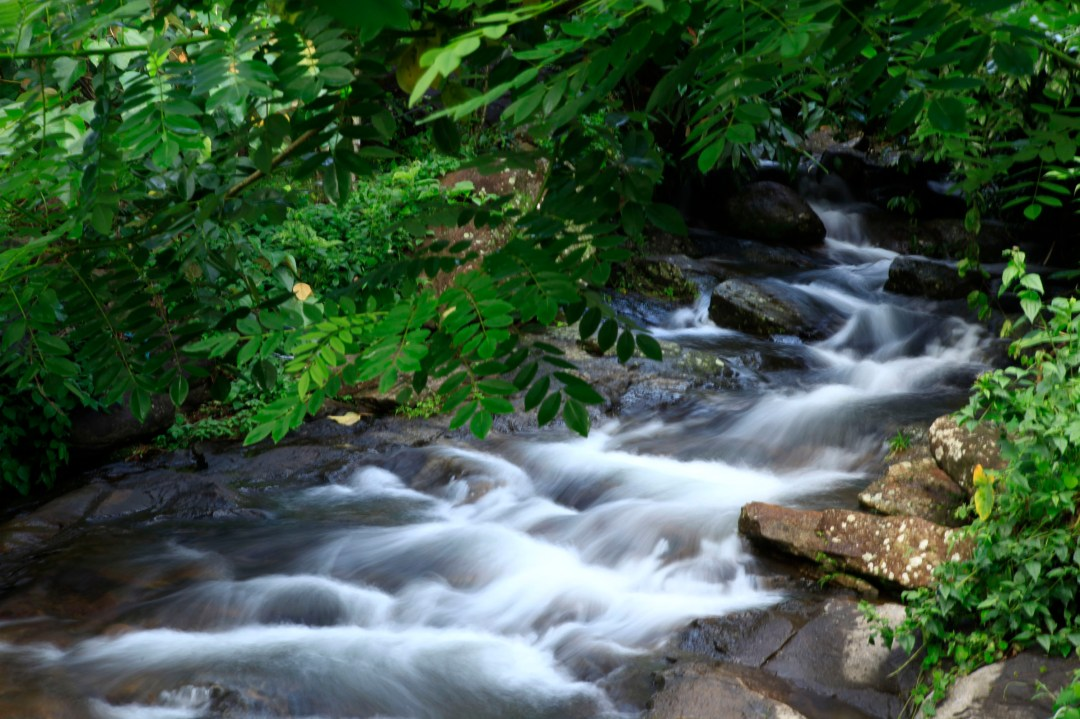 munnar stream, kerala tour operators