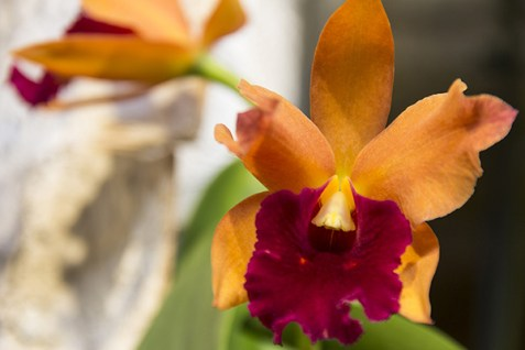 Orchideenausstellung 3-1