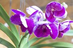 Orchideenausstellung 9-1