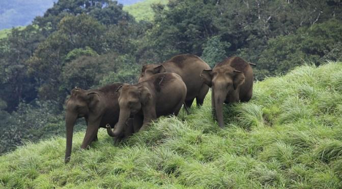 Periyar wildlife sanctuary, Thekkady