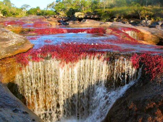 Cano Cristales'ten Güzel Nehir