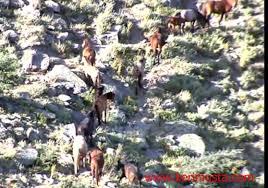 Karadağ'ın Özgür Çocukları - Yılkı Atları