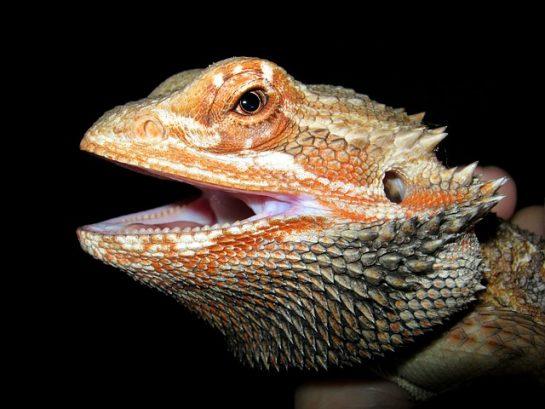 Birbirinden Güzel Hayvan Resimleri (24 Resim)
