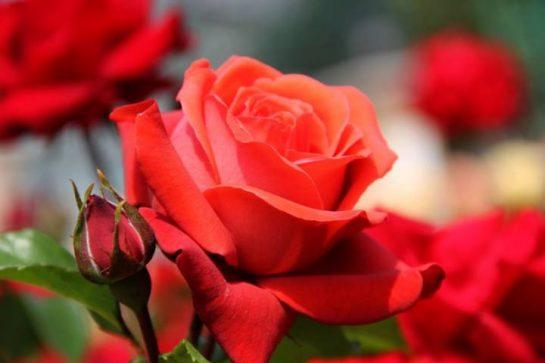 Sevgi ve Özlem Üzerine Bir Yazı