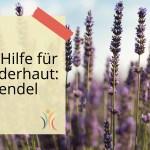 Lavendel, die Kinderhautheilpflanze