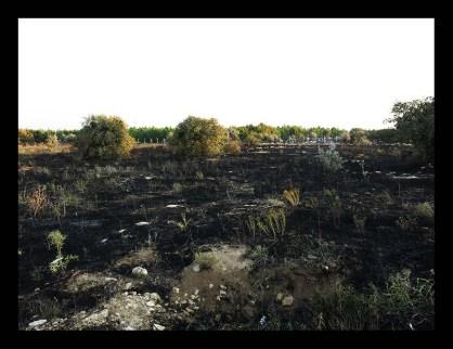 Haritada 1 numaralı alan bu fotograftaki yanmış otları gösteriyor. Fotoğraf güneye doğru bakarak çekildi. Hemen 50m uzaktaki ağaçların yangından etkilenmediği görünüyor.