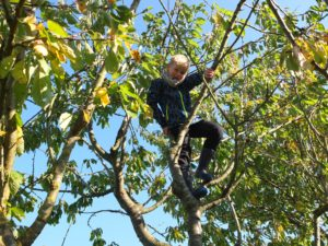 child-in-the-tree-1563149