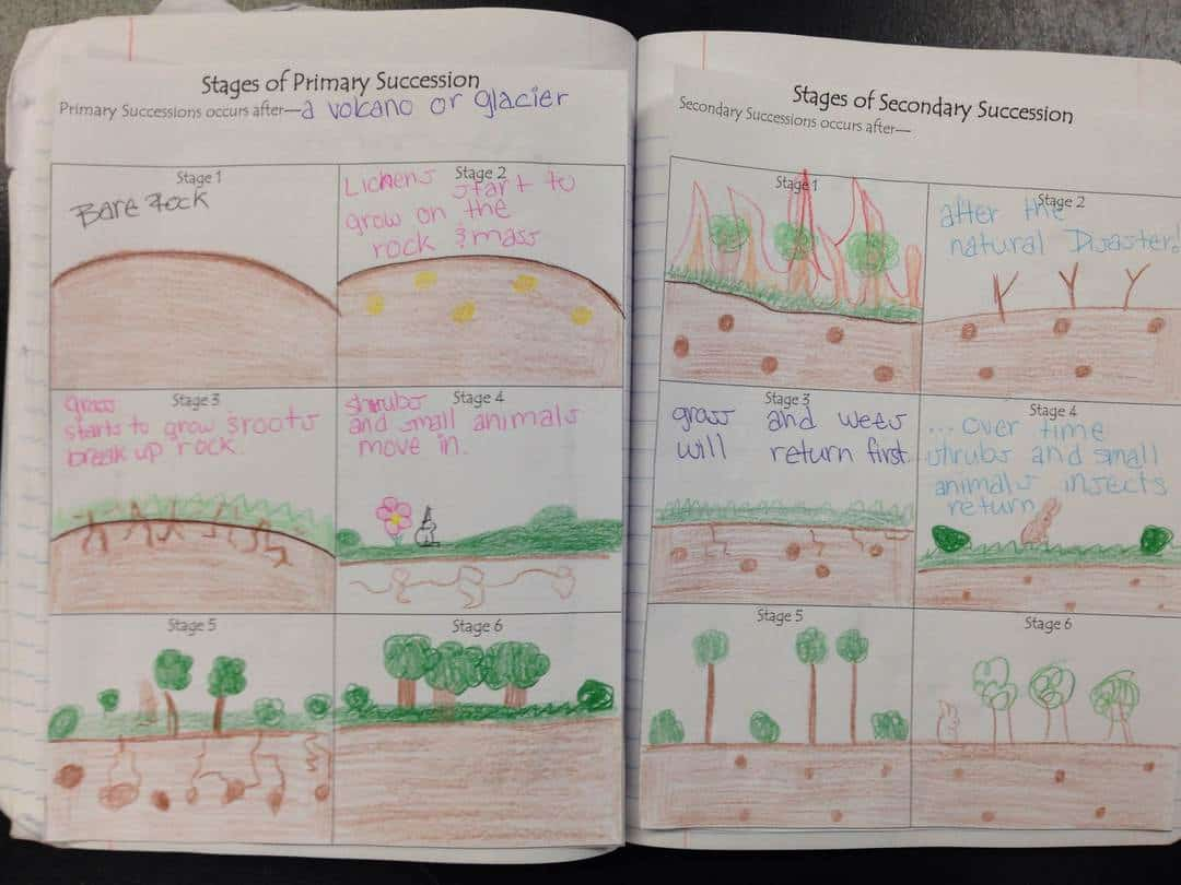 Primary And Secondary Succession Picture Notes