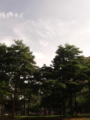 The verdant Minsheng Community (by Rose Peng)
