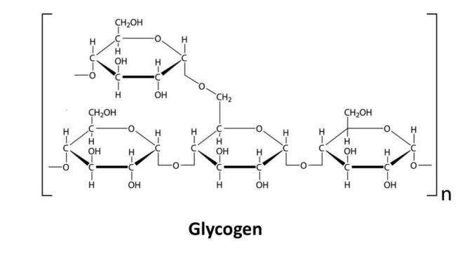 Glycogen | keto-vegan.com