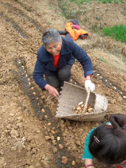 Starting at the source – planting next year's potatoes in a mountainside garden in Sichuan Province.
