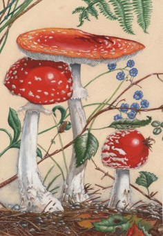 FLY_AGARIC_1997_by_kevcrossley