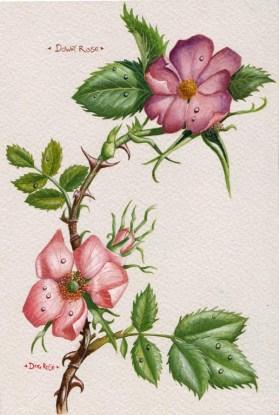 roses_by_kevcrossley