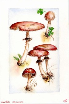 stropharia_mushroom_by_kevcrossley