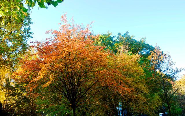 outono na Europa