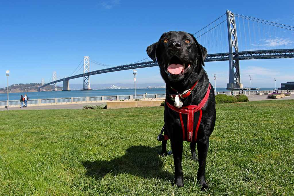 Raffi by the Bay Bridge