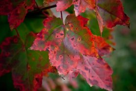 Fall Foliage 2013