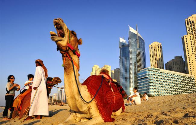 A Camel in Dubai
