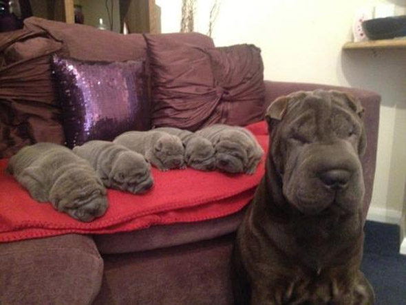 The Wrinkle Factory