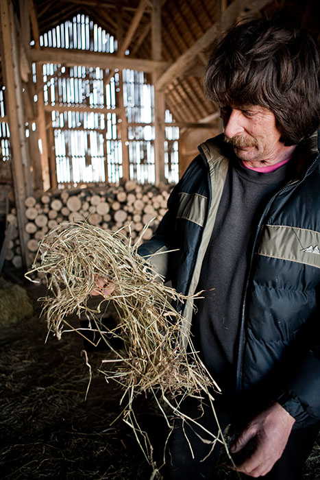 Here's Ivan showing me one of the blends of hay that he feeds his cattle in the winter.