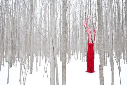 Red Tree in the Forest