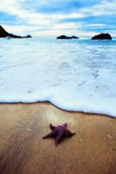 Reach for the stars, Big Sur, California