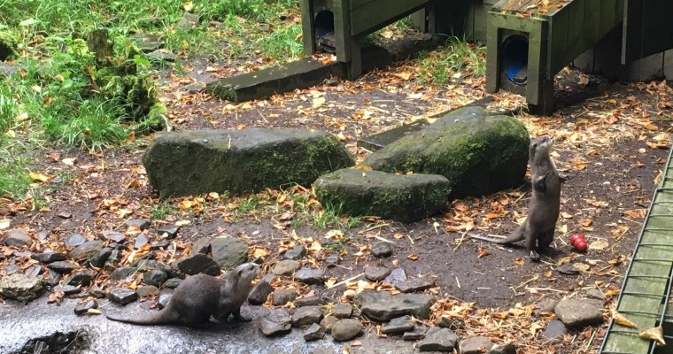 Otters, owls and opportunities