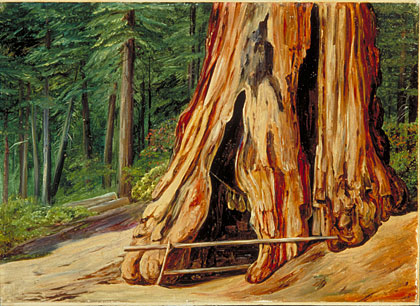 Home of an Old Trapper in the Trunk of a Big Tree, Calaveras Grove, California