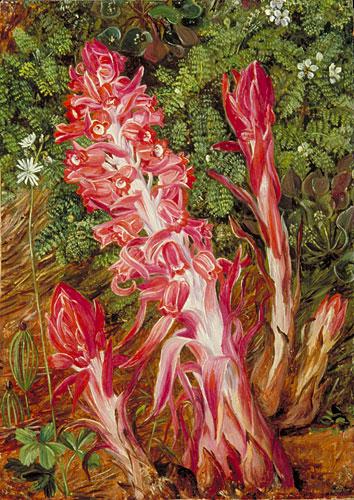 Californian Flowers