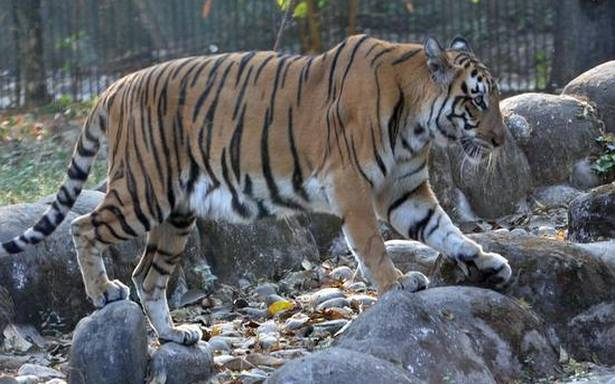 Alipore Zoo animals are being given vitamins to save them from corona