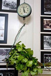 Key Peninsula Historical Society & Museum Cackleberries Humbleberries & Hooch Exhibit, Brush scale